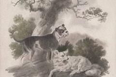 1830-Bull-Dog-and-Pomeranian-Dog-Tookey-James