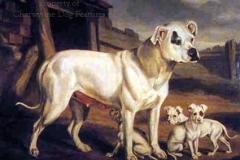 189F-Bulldog-1850