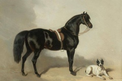 An-Arabic-horse-and-bulldogue-Alfred-Dedreux-1810-1860