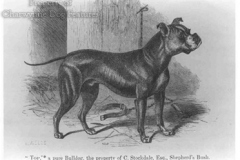Bulldog-1850_225