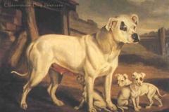 Bulldog-1850_84B