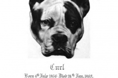 CURL-THE-BEST-OF-BULL-DOGS-1888
