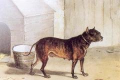 Nettle-dog-liutu-baitinimui-1825