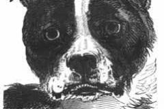 bulldog-head-1850
