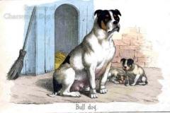 189G-Bulldog-1860