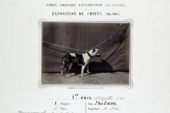 307F-Brindle-Bulldog-Exposition-de-chiens-au-Jardin-dacclimatation-mai-1863