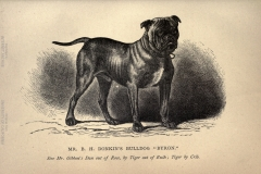 British-dogs.-CHAPTER-VII.-2