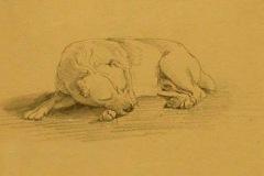 Bull-Terrier-Edwin-Henry-Landseer-1803-1873