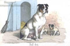 Bulldog-1860_201