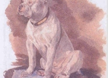 Bulldog-1870_21