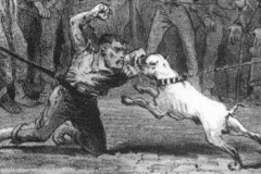 Fights-between-man-and-Bulldog-also-occurred-Physic-vs-Brummy-an-evening-at-Hanley-1874