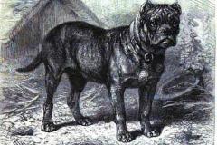 The-Royal-Natural-History-Volume-1-1894