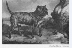 BULL-AND-TERRIER-BY-JAMES-WARD1820