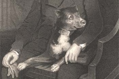 1805-Camp-Favourite-Dog-1805