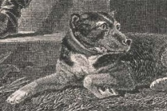 1805-Camp-Scott-Favourite-Dog-1805