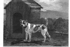 1812-dustman
