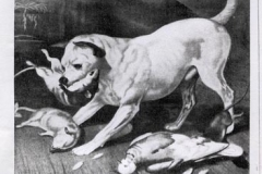 1870-829-2-EARLY-STAFFIE-The-breed-type-depicted-around-1870