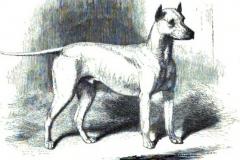 1872-madman