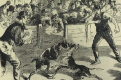 Dog-fighting-in-the-USA-Illustrated-Police-News-January-1867