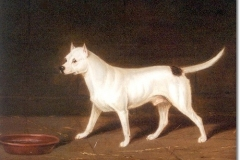 EARLY-BULL-TERRIER-OIL-PAINTING-BY-EDWIN-LODER-OF-BATH-1827-1885