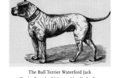 WATERFORD-JACKCIRCA-1873