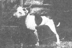 1880-Lloyds-Paddy
