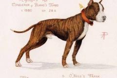 1880-burkes-tumbo