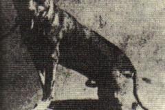 BURKES-TANNER-1890-ar-anksciau