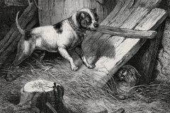 EARLY-BULL-TERRIER-SKETCHCIRCA-1880