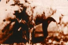 GR-CH-GALVINS-PUP-1890