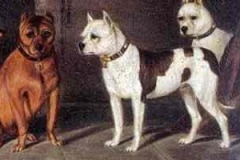 PREDECESSORS-OF-THE-STAFFORDSHIRE-BULL-TERRIER-OIL-PAINTING-BY-F.-LODER-1880
