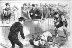 DOG-FIGHTING-SKETCHTHE-NATION-POLICE-GAZETTE-NEW-YORKCIRCA-1880