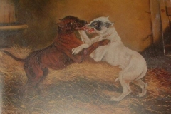 FIGHTING-TERRIERS-OIL-ON-CANVAS-YEAR-ARTIST-UNKNOWN
