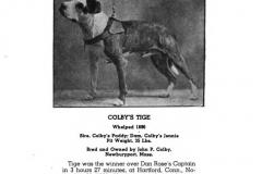 1896-colbys-tige