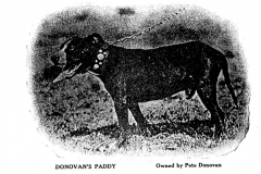 donovans-paddy