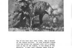 galvins-pup