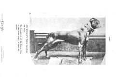 gas-house-dog-grip