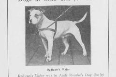 radicans-major
